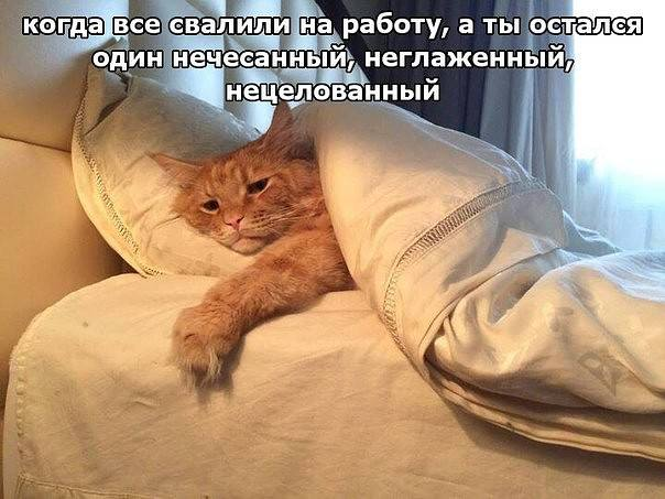 http://images.vfl.ru/ii/1516540477/722b4ba9/20247012_m.jpg