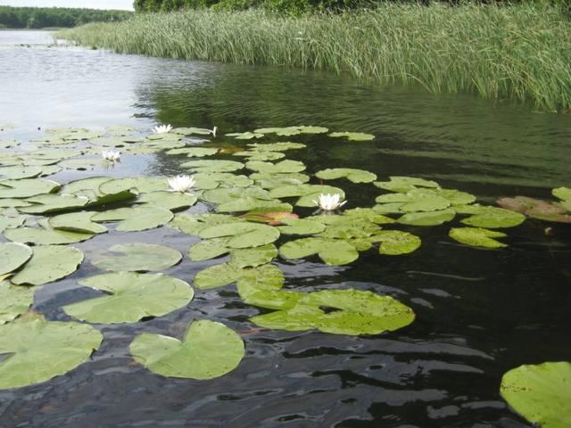 http://images.vfl.ru/ii/1516646386/18f041b5/20264949_m.jpg
