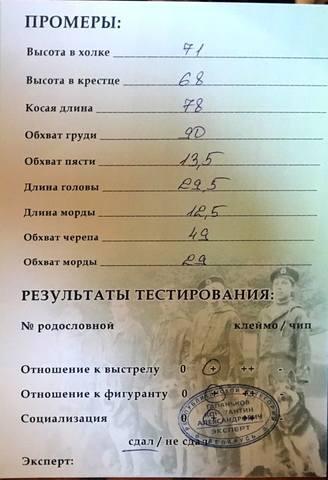 МАРРАКЕШ ДЕФАНС ЛЕЮР (г. Брест) 20265092_m