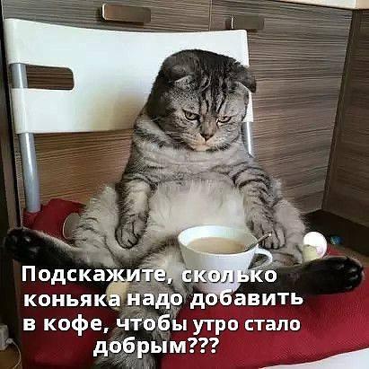 http://images.vfl.ru/ii/1517082627/fb47f306/20335107_m.jpg
