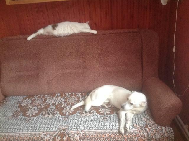 http://images.vfl.ru/ii/1517136026/b35665e4/20340341_m.jpg