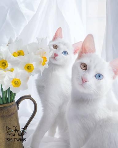 http://images.vfl.ru/ii/1517392507/ec8e09db/20381958_m.jpg