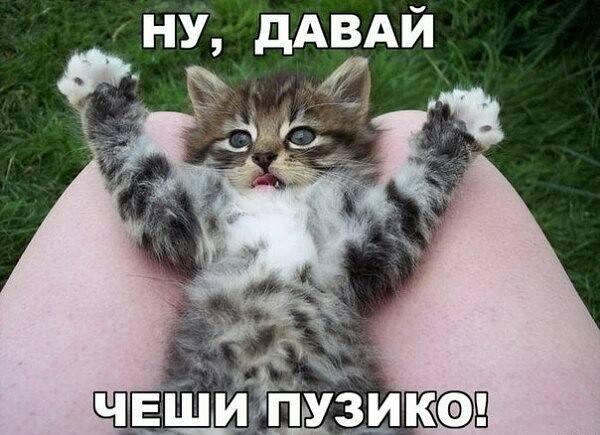 http://images.vfl.ru/ii/1518125203/942b823b/20507017_m.jpg