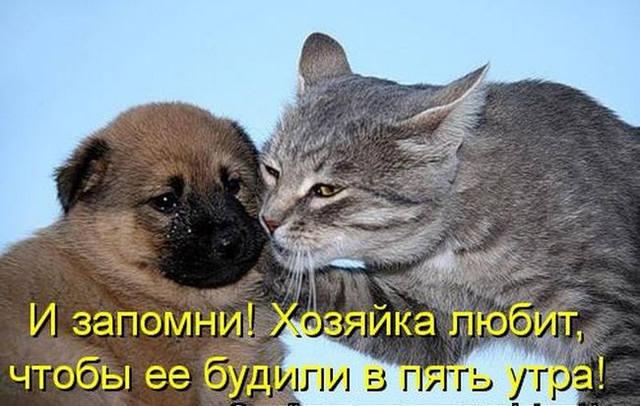 http://images.vfl.ru/ii/1518125279/0d087b67/20507025_m.jpg