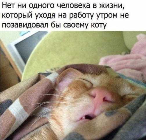 http://images.vfl.ru/ii/1518603350/68667694/20581794_m.jpg