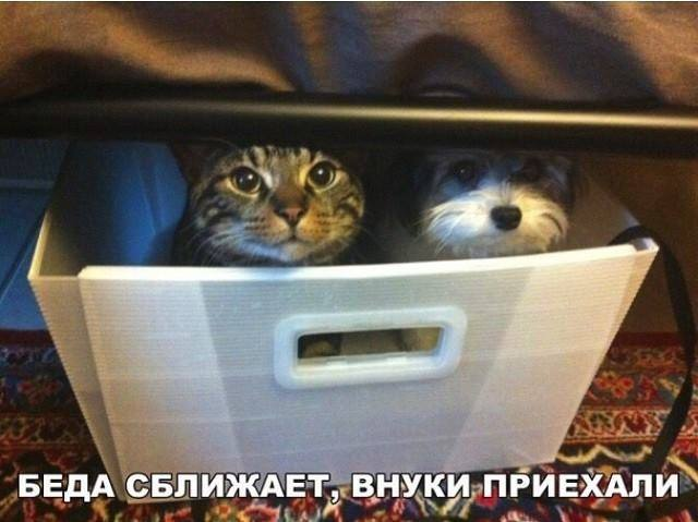 http://images.vfl.ru/ii/1518646226/2d1c3c27/20591276_m.jpg