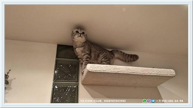 http://images.vfl.ru/ii/1519245590/1b227866/20681963_m.jpg