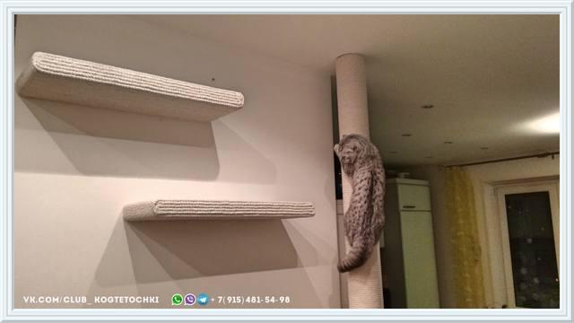 http://images.vfl.ru/ii/1519245590/637e44af/20681962_m.jpg