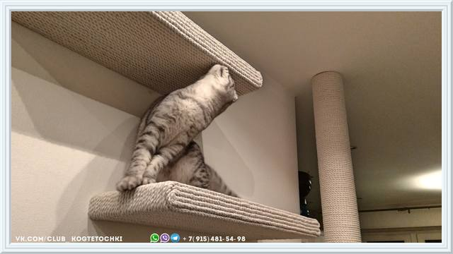 http://images.vfl.ru/ii/1519245590/fd5a2a50/20681964_m.jpg