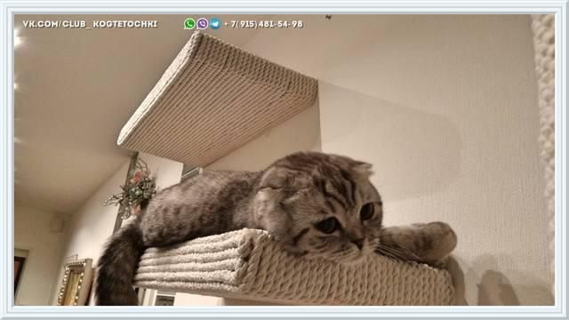 http://images.vfl.ru/ii/1519245591/86eb913b/20681966_m.jpg