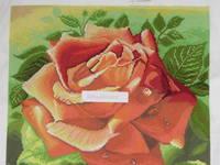 http://images.vfl.ru/ii/1519327796/6dad6ae8/20695583_s.jpg