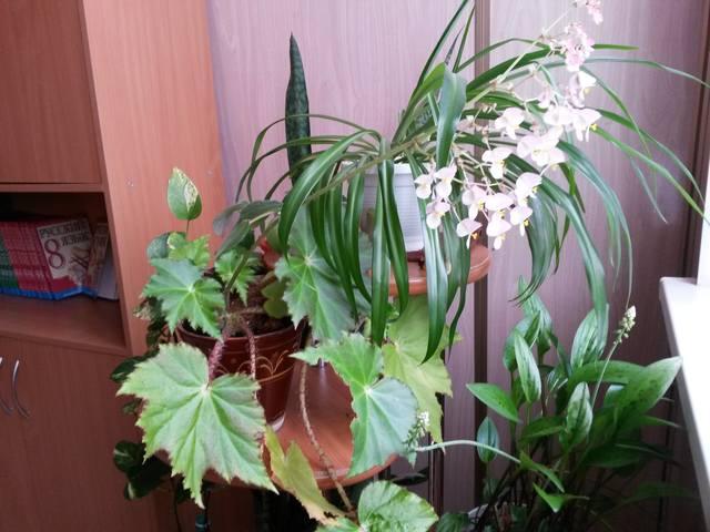 http://images.vfl.ru/ii/1519590739/7ae81ad5/20733604_m.jpg
