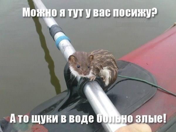 http://images.vfl.ru/ii/1520695123/643fb5a6/20901857_m.jpg