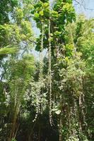 Участок сельвы (тропического леса) на территории парка-музея Ла-Вента в шт. Табаско, посвящённого культуре ольмеков. Фото Морошкина В.В.
