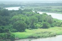 Заросли сельвы у реки. Фото Морошкина В.В.