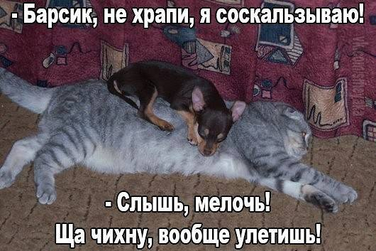 http://images.vfl.ru/ii/1521024596/6ac222e5/20952114_m.jpg