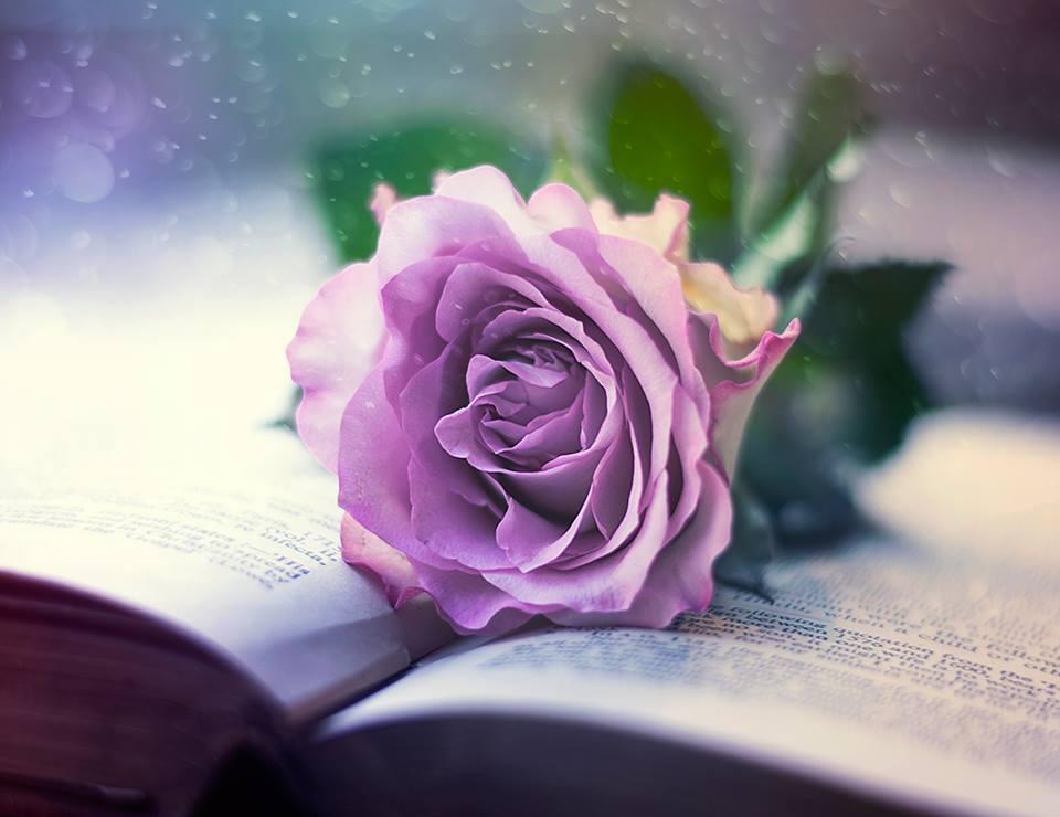 【本博精典素材篇】让一个安静的幸福平静的停留 - 浪漫人生 - .