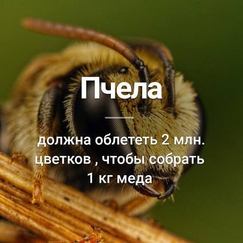 Пчёлки очень любят мёд