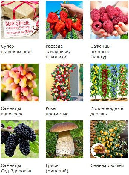 Промокод Беккер.Скидка 10% на все товары + Бесплатная доставка + 10 упаковок семян в подарок