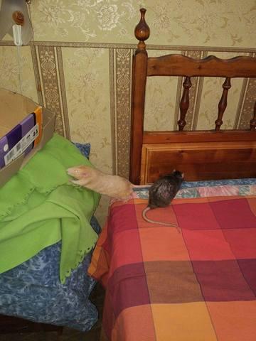 http://images.vfl.ru/ii/1521766079/98894c7e/21074867_m.jpg