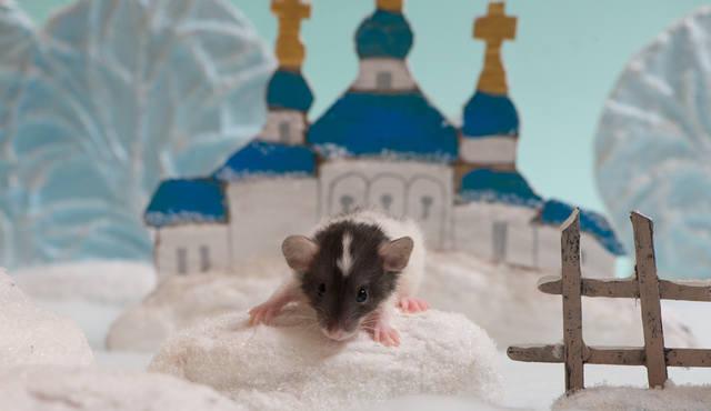 http://images.vfl.ru/ii/1523060826/c1b59310/21280974_m.jpg
