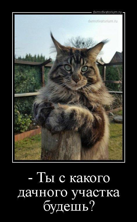 http://images.vfl.ru/ii/1523821646/751619d6/21386312.jpg
