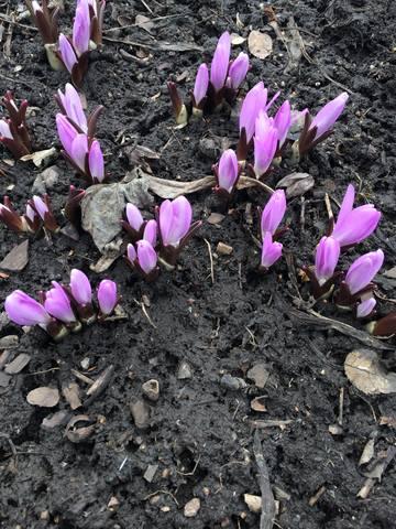 Весна идет!!! - Страница 4 21400750_m
