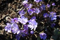 Весна идет!!! - Страница 7 21446084_s
