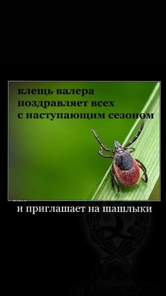 http://images.vfl.ru/ii/1524327743/e6a4cc90/21458455.jpg