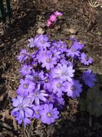 Весна идет!!! - Страница 10 21468658_s