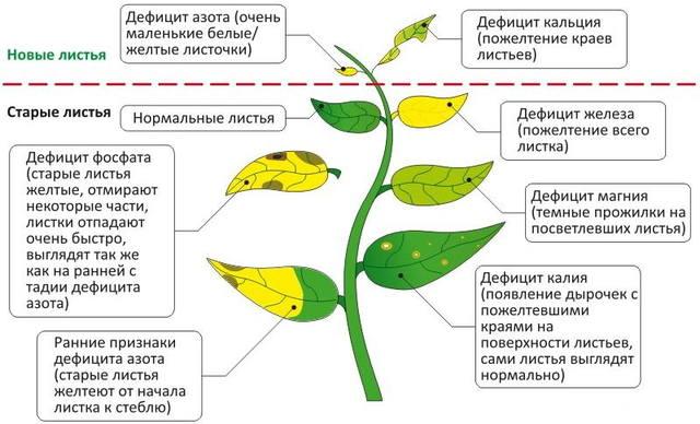 http://images.vfl.ru/ii/1524434548/d176e2c1/21472578_m.jpg