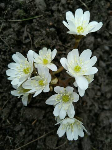 Весна идет!!! - Страница 10 21473666_m