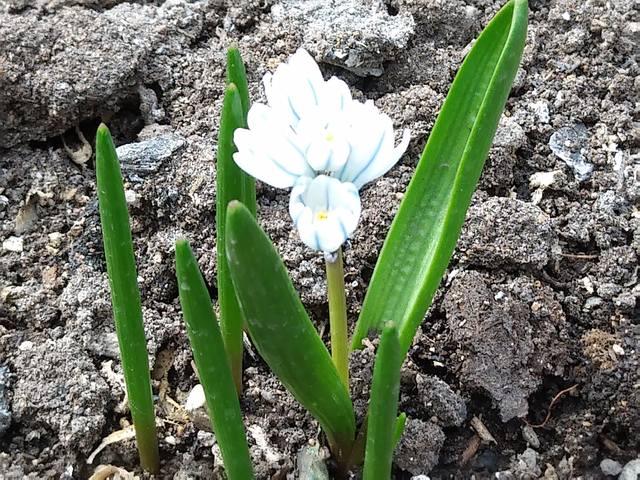 Весна идет!!! - Страница 10 21515445_m