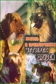 http//images.vfl.ru/ii/1525001530/bbaa7df1/21551258.jpg