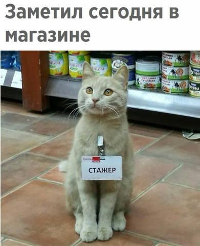 http://images.vfl.ru/ii/1525279738/c0d52a64/21589229_m.jpg