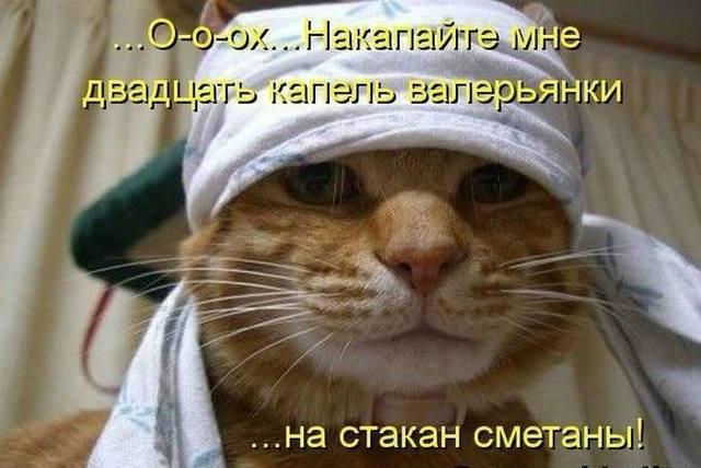 http://images.vfl.ru/ii/1525538818/a771eb01/21627980_m.jpg