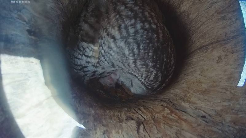 8:41 Klaara is done feeding and starts cleaning, there are no hungry sounds  anymore.
