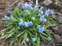 Весна идет!!! - Страница 19 21687776_s