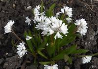 Весна идет!!! - Страница 19 21687803_s