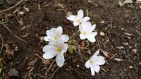 Весна идет!!! - Страница 21 21704193_s
