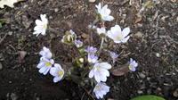 Весна идет!!! - Страница 21 21704203_s