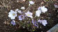 Весна идет!!! - Страница 21 21704226_s