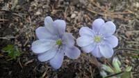 Весна идет!!! - Страница 21 21704240_s