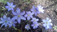 Весна идет!!! - Страница 21 21704263_s
