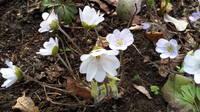 Весна идет!!! - Страница 21 21704333_s