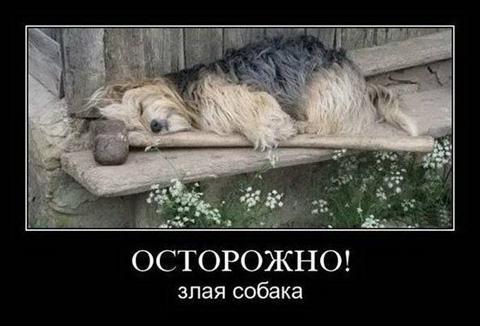 http://images.vfl.ru/ii/1526127285/13d96ee7/21712431.jpg
