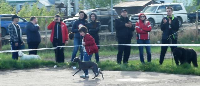 http://images.vfl.ru/ii/1526155787/1557ea51/21718110_m.jpg