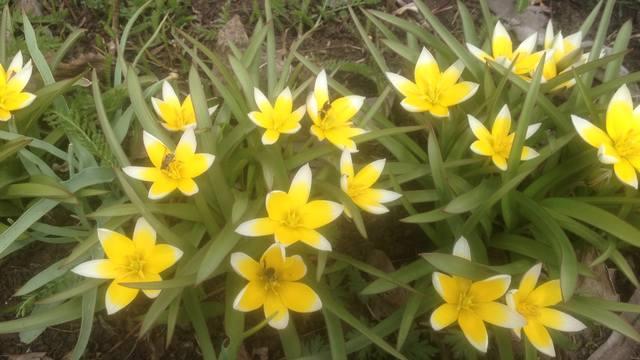 Весна идет!!! - Страница 30 21781420_m