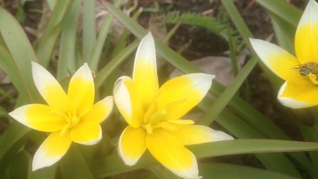 Весна идет!!! - Страница 30 21781446_m