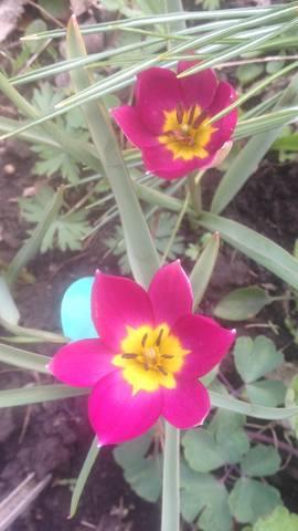 Весна идет!!! - Страница 30 21781550_m